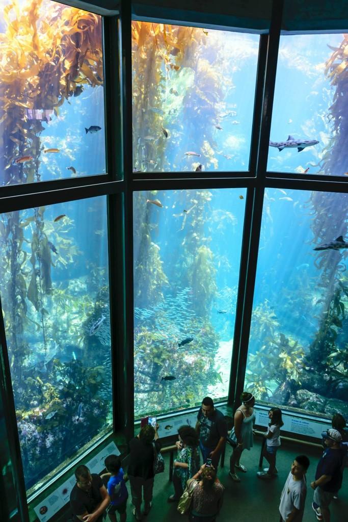 Monterey Bay Aquarium © Paolo Rota, 2015