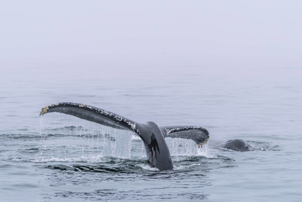 Monterey Bay Whale Watch © Paolo Rota, 2015