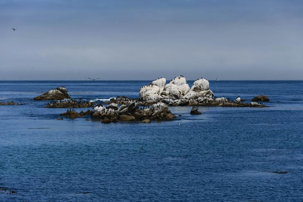 Cormorani in Monterey © Paolo Rota, 2015