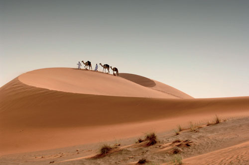 Camels-in-the-desert